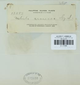 Image of Meliola araneosa