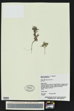 Nama retrorsum image
