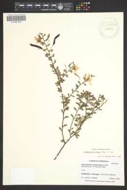 Image of Chamaecrista ramosa