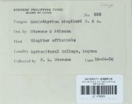 Image of Coniothyrium zingiberis