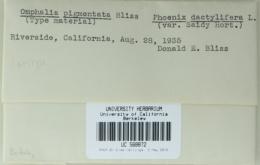 Image of Omphalia pigmentata