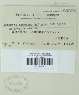 Image of Asterina breyniae