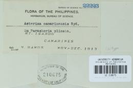 Image of Asterina camarinensis