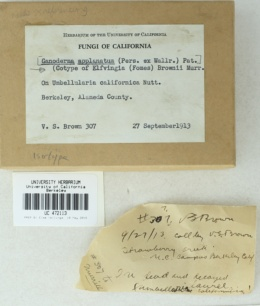 Image of Ganoderma brownii
