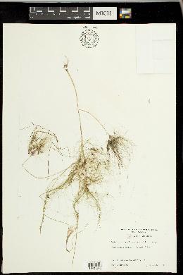 Websteria image