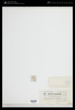 Glaucocystis nostochinearum image