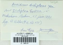 Image of Aecidium diclipterae