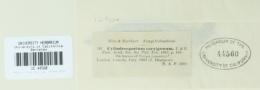 Mycosphaerella caryigena image