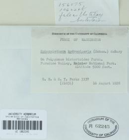 Microbotryum bistortarum image