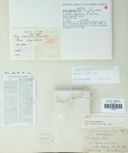 Image of Poria sequoiae