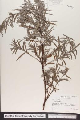 Salix interior image