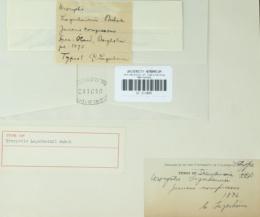 Image of Urocystis lagerheimii