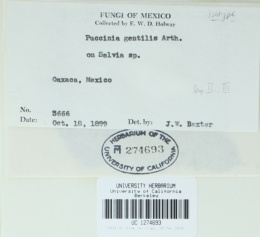 Image of Puccinia gentilis