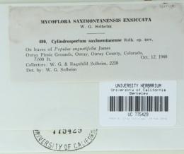 Cylindrosporium saximontanense image