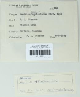 Image of Aecidium ocfemianum