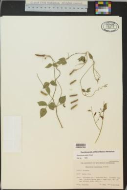 Rhynchosia edulis image