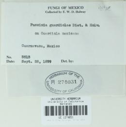 Image of Puccinia guardiolae