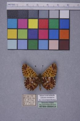 Boloria chariclea image