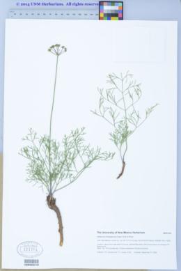 Harbouria trachypleura image