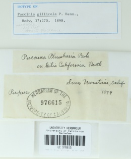 Image of Puccinia giliicola