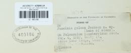 Image of Puccinia gulosa
