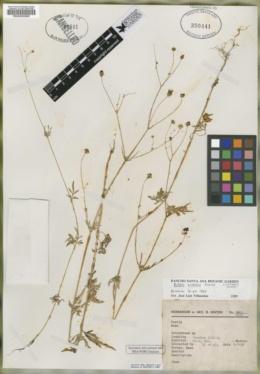 Image of Bidens minensis