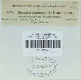 Image of Septoria macrosporia