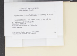 Hyperphyscia adglutinata image