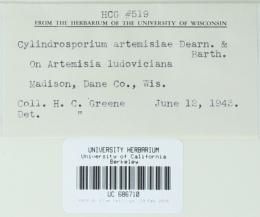 Cylindrosporium artemisiae image