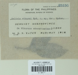 Image of Meliola viburni