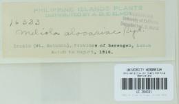 Image of Meliola alocasiae