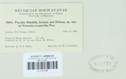 Image of Puccinia illatabilis