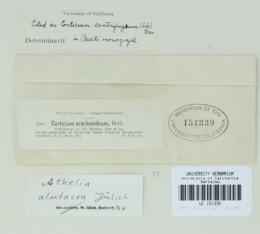 Image of Athelia alutacea