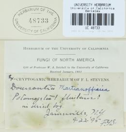 Doassansiopsis hydrophila image