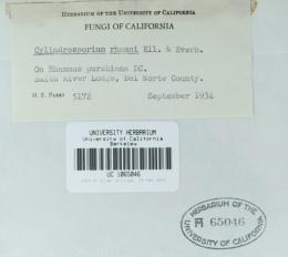 Cylindrosporium rhamni image