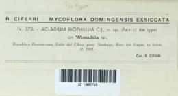 Image of Acladium biophilum