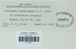 Cercospora echinochloae image