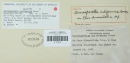 Image of Cercosporella californica