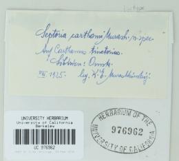 Image of Septoria carthami
