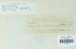 Image of Mycosphaerella leucospila