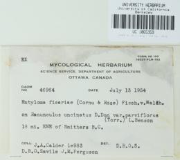 Entyloma ficariae image