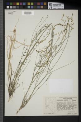 Astragalus remotus image