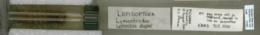 Lymantria dispar image