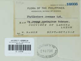 Image of Phyllachora premnae