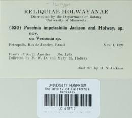 Image of Puccinia impetrabilis