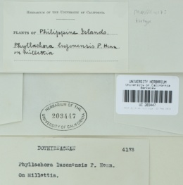 Image of Phyllachora luzonensis