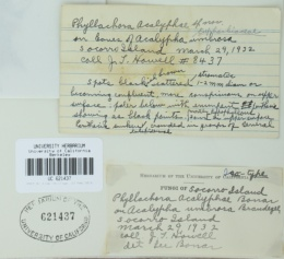 Image of Phyllachora acalyphae