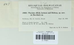 Image of Puccinia albula