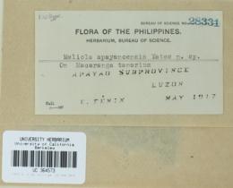 Image of Meliola apayaoensis