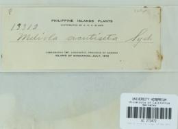 Image of Meliola acutiseta